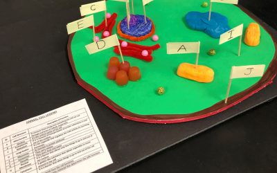 6th Graders Design and Make Cells