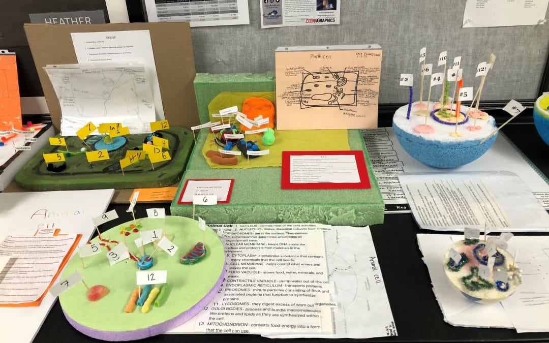 6th Grade Science Students Complete Their Study of Cells