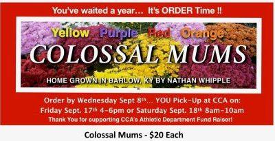 Annual Colossal Mum Sale!